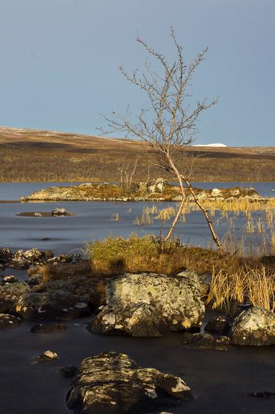 Birches at Tsahkaljärvi
