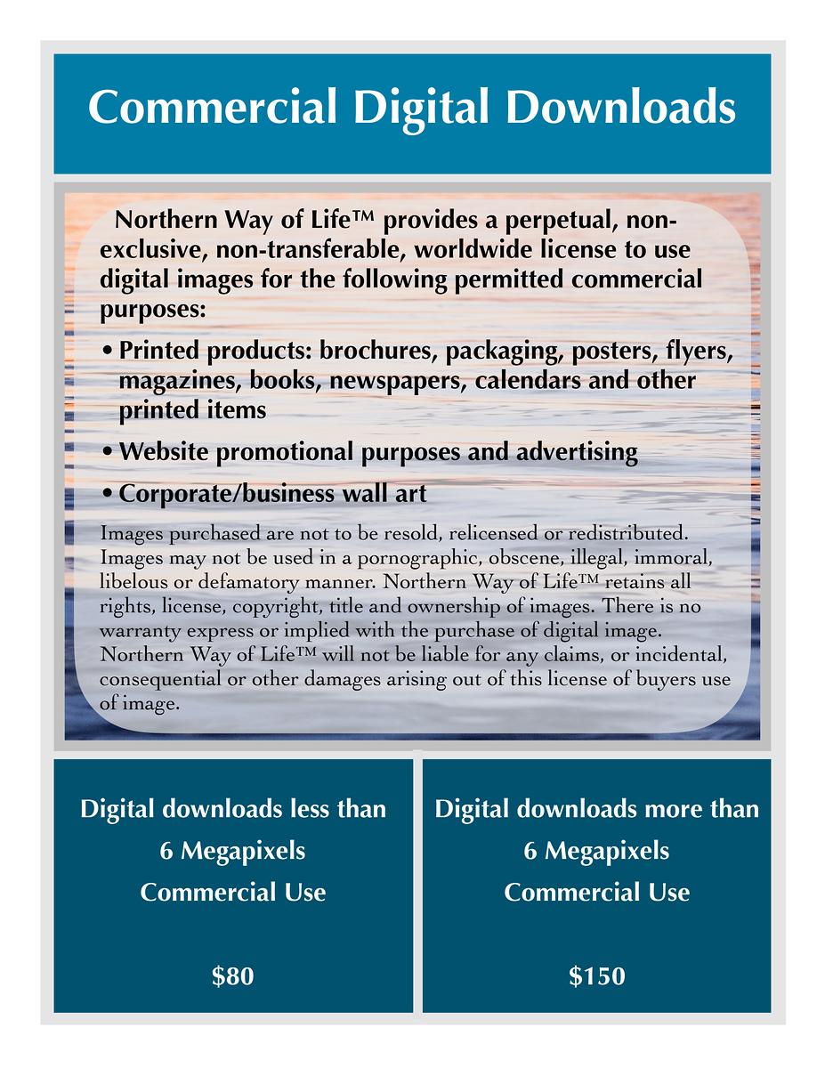 Commercial Digital Downloads