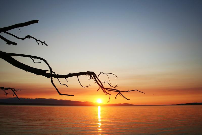 110908-364 (Puget Sound, Sunset, Sky, Branch, Gull).jpg
