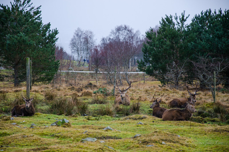 Scotland-Highland-8971.jpg
