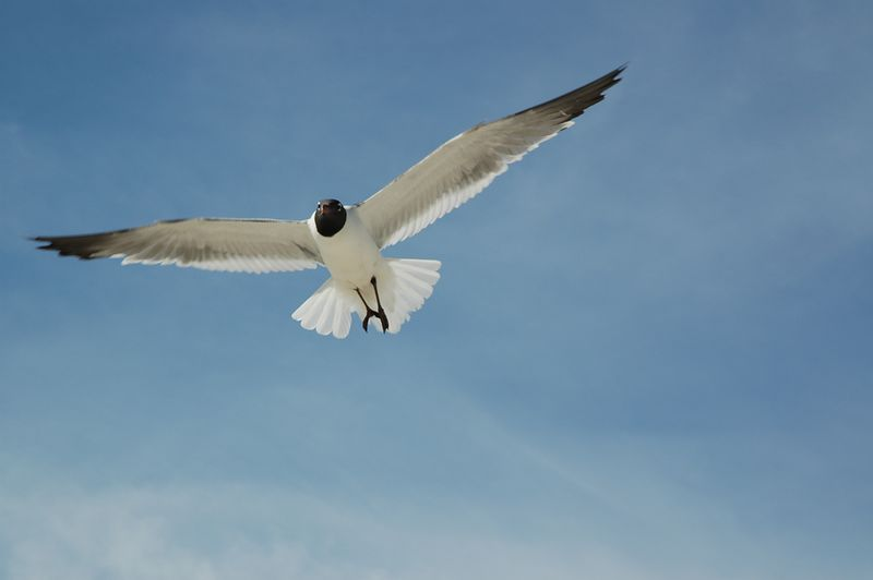 Seagull stalking the camera.