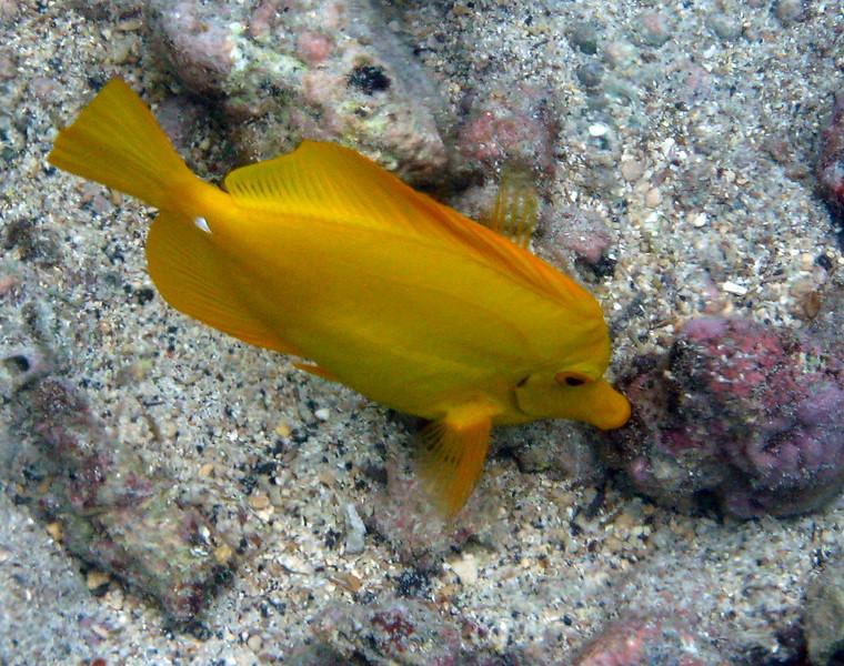 463- 20080416- Hawaii 20-Snorkelling IMG_0652.jpg