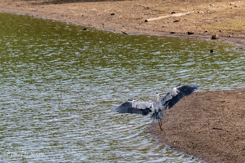 Ardingly Reservoir-8296.jpg