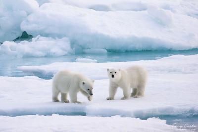 2005 Svalbard