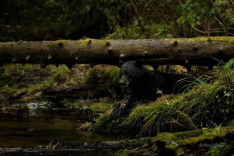 20150926-_G7Q0142Spirit-Bears-British-Columbia-Edit - Copy.jpg