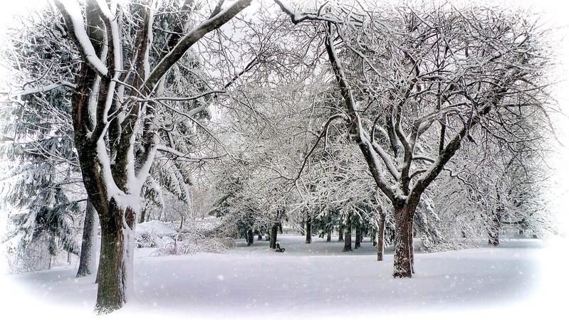 snow-lx3-130228-p1030488-simplify buzsim5.high key-snowing.jpg