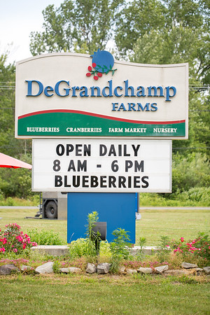 Blueberry 2019