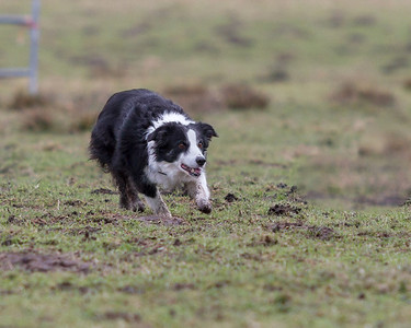 2014 Fido's Farm Sheepdog Trials