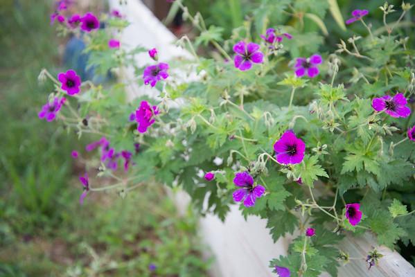 Flowers & Hodgepodge