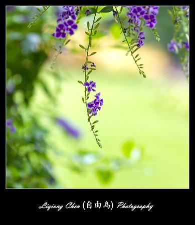 unknown flower-46