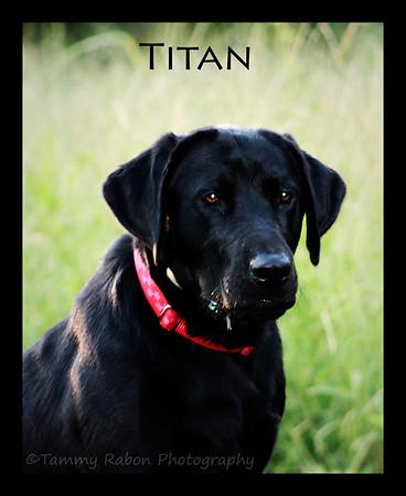 Titan~2012