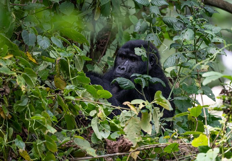 Uganda_T_Gor-2160.jpg
