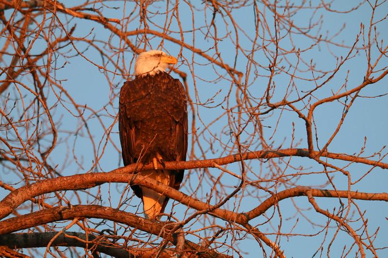 2-18-17 Eagle Final-14.jpg