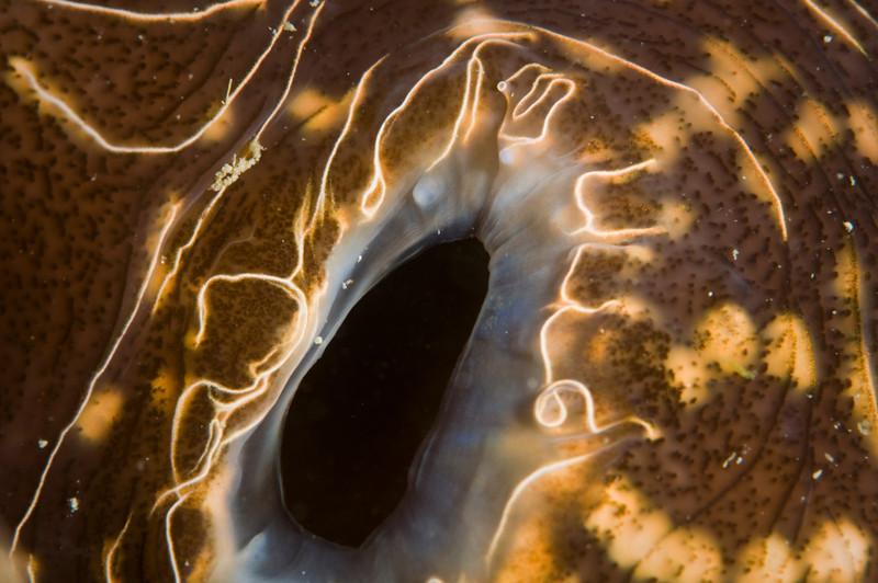 clam-4450.jpg
