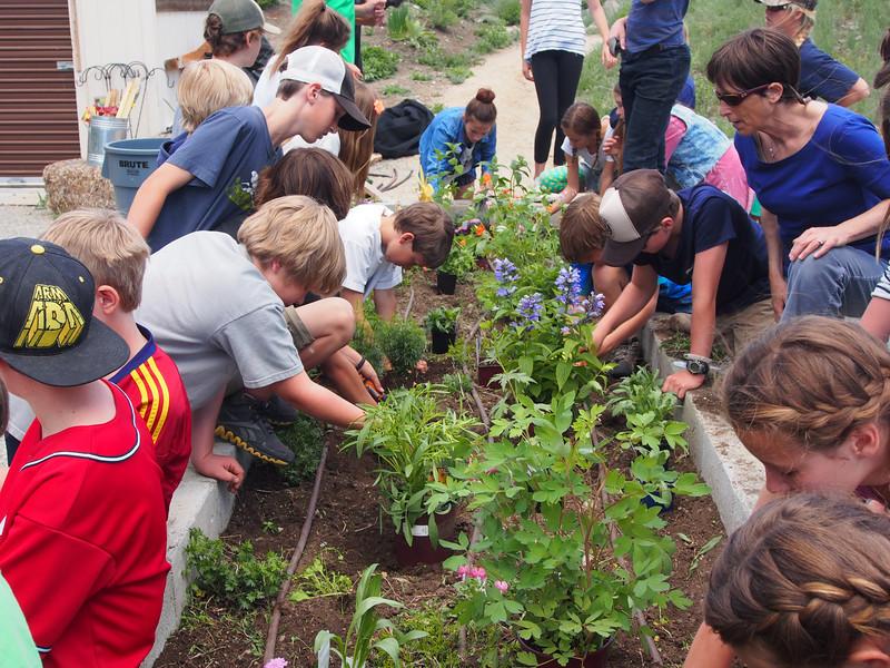 Planting at the Botanical Garden