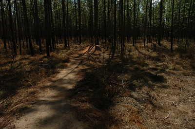 28 February 2011 Trail Dynamics on Munson