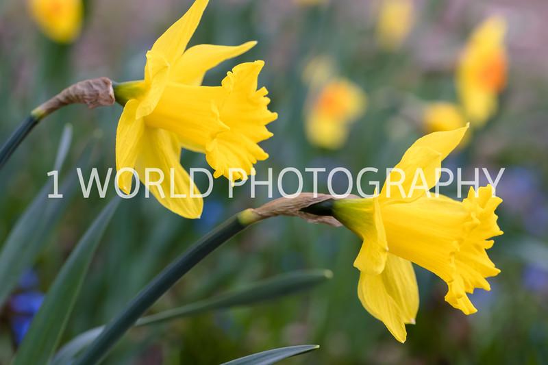 20190416Spring Flowers_Cantigny 4_17_19094--82.jpg