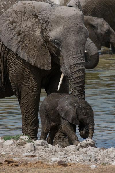 Africa-0968.jpg