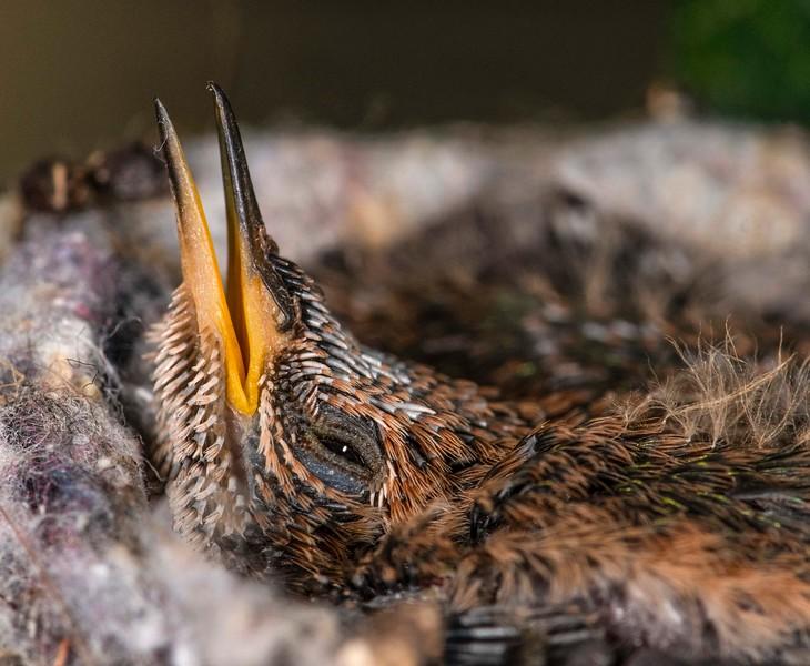 Hummingbirds-28.jpg