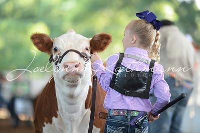 2017 Pecan Classic Steer Show