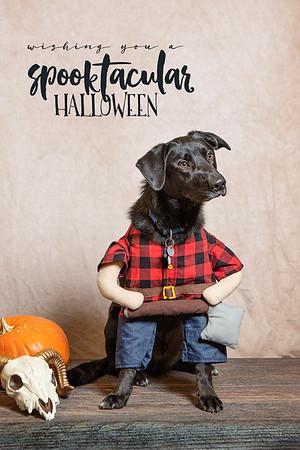 Pet Valu Halloween Shoots