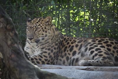 SD Zoo 2018-07-24