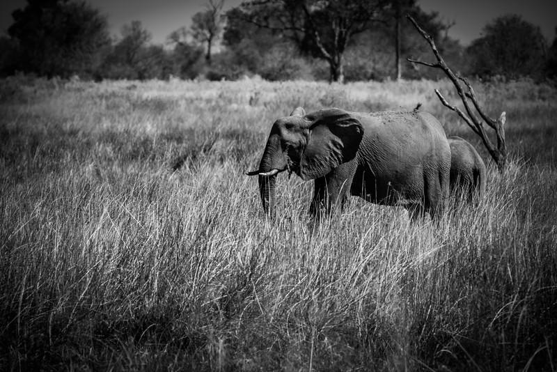 Botswana_June_2017 (120 of 6179).jpg