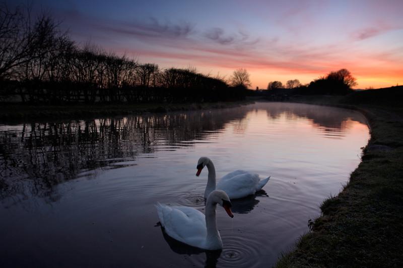 117 Swans - 2538.jpg