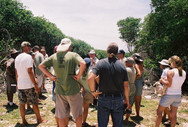 2009 Mangrove Restoration Bonaire