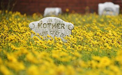 Pandemic Cemetery Flowers