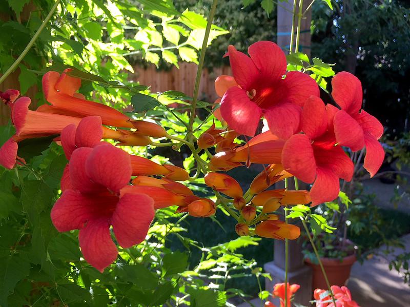 vine flowers.jpg
