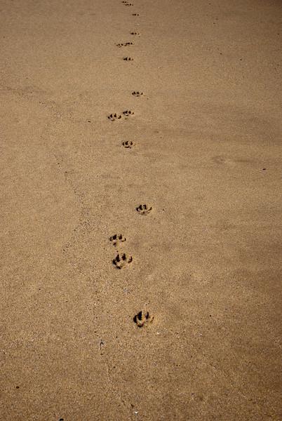 Rattray Head Beach-23