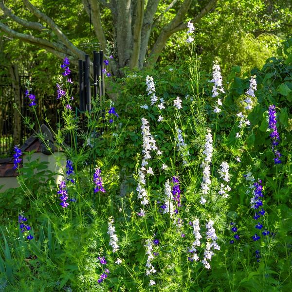 Garden 1, 117.jpg
