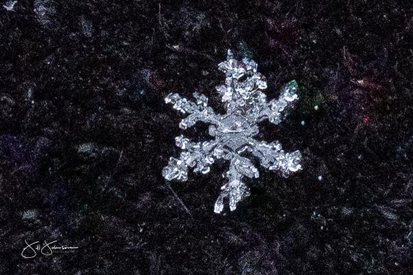 snowflakes-1539.jpg
