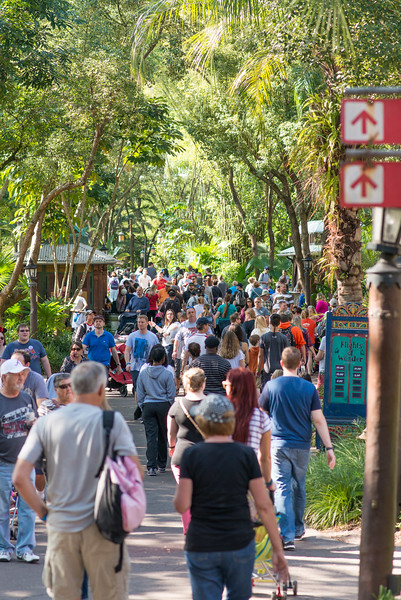 Crowded Walkway - Animal Kingdom Walt Disney World
