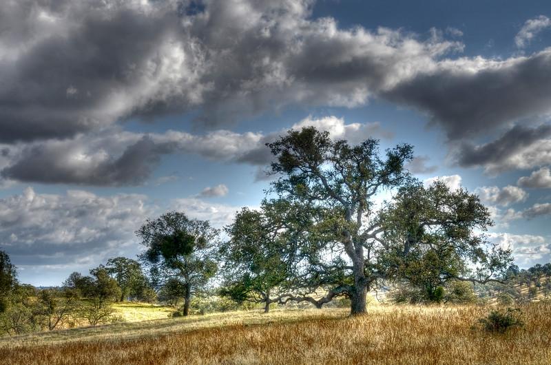 Summer Oak, California