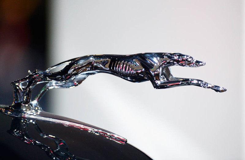 . LOS ANGELES, CA - NOVEMBER 28:  The Grayhound hood ornament on the one-of-a-kind 1937 Lincoln Derham Sport Sedan is shown on display as part of Lincoln\'s Heritage On Display during the Los Angeles Auto Show media day on November 28, 2012 in Los Angeles, California. The LA Auto Show opens to the public November 30 and runs through December 9.  (Photo by Kevork Djansezian/Getty Images)