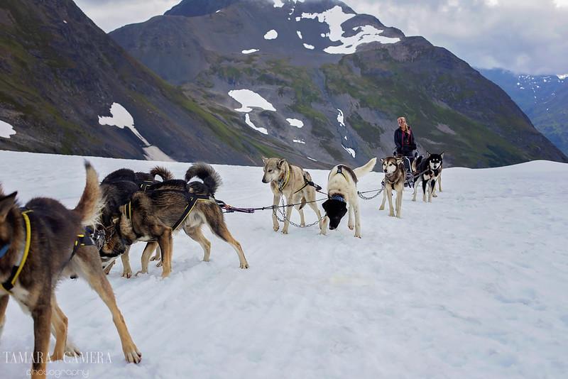 DogSledding2-7-2.jpg
