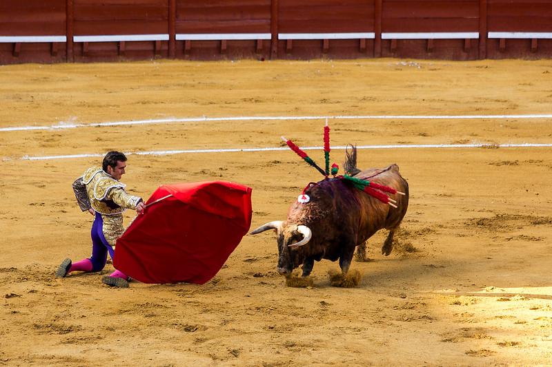 Bullfight15.jpg
