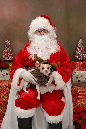 Pet Santa Photos at WAH 2008