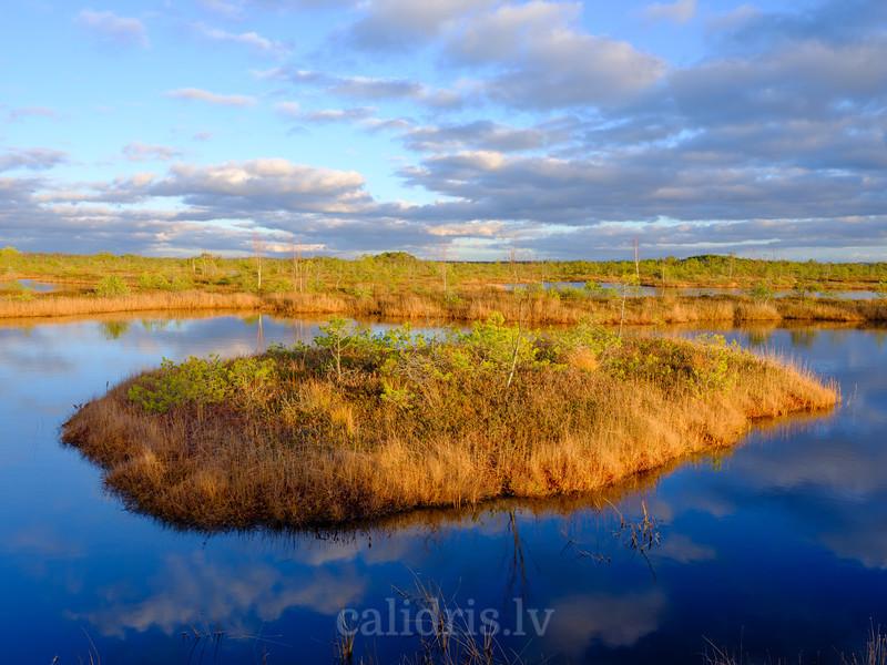 Sala Cenas tīreļa vienā no ezeriem