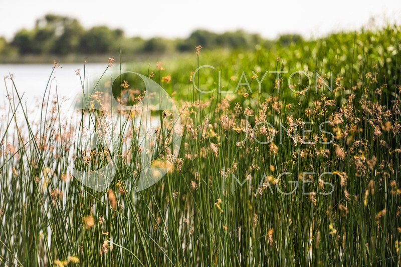 lake_wichita_grass_1.jpg