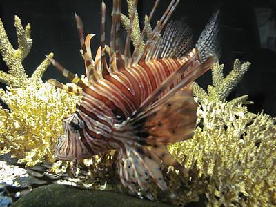 Aquarium Creatures