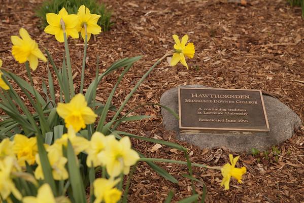 Hawthornden Flowers