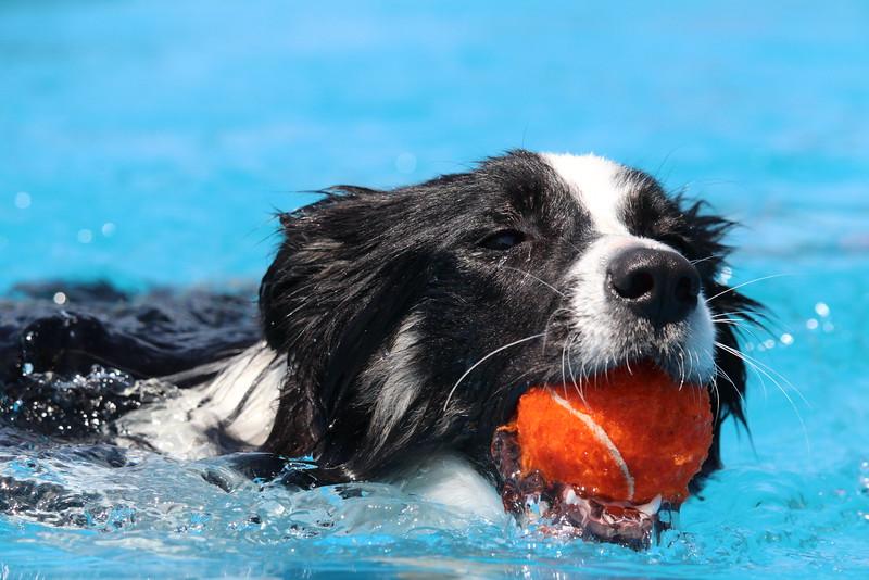 2015.8.6 Winnebago County Fair Dock Dogs (22).JPG