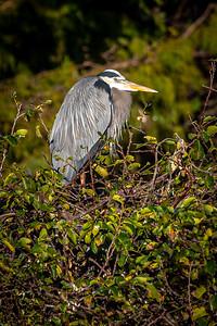 Wakodahachee Birds