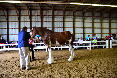 37 566 Mare 2-3 Clydesdale