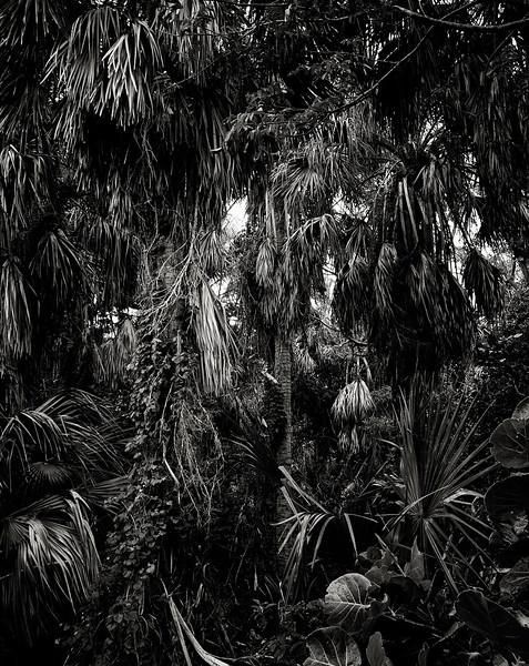 macarthur-park-palm-trees.jpg