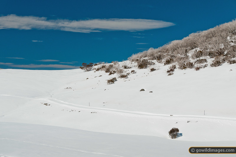 Cross-country ski trails near Rocky Valley Reservoir, Falls Ck. The snow gums are still recovering from the 2003 bushfires.