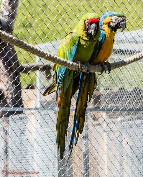 Vogelpark Ambigua 2016-05-21 -0U5A1175.jpg
